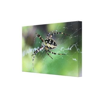 Ciérrese encima de la araña que se arrastra en su  lona estirada galerías