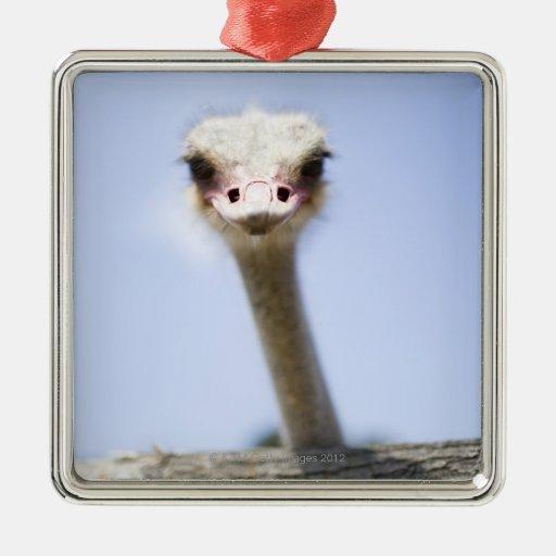 Ciérrese encima de la cabeza de la avestruz adorno cuadrado plateado