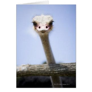 Ciérrese encima de la cabeza de la avestruz tarjeta de felicitación