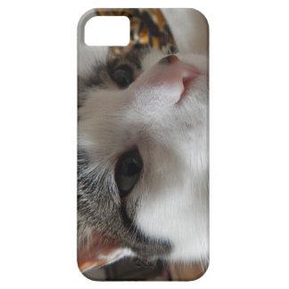 Ciérrese encima de la caja del teléfono del gato funda para iPhone SE/5/5s