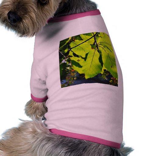 Ciérrese encima de la foto de las hojas de la haya prenda mascota