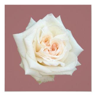 """Ciérrese encima de la opinión un rosa blanco invitación 5.25"""" x 5.25"""""""