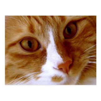 Ciérrese encima de la postal del gato