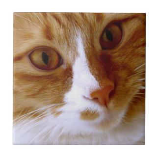 Ciérrese encima de la teja del gato