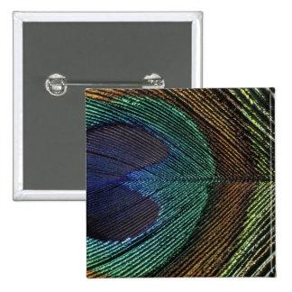 Ciérrese encima de la vista del eyespot en la plum pin cuadrada 5 cm