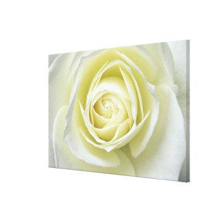 Ciérrese encima de los detalles del rosa blanco impresión en lona estirada