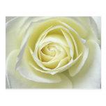 Ciérrese encima de los detalles del rosa blanco tarjetas postales