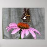 Ciérrese encima de mariposa impresiones