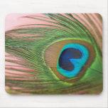 Ciérrese encima de pluma del pavo real con rosa alfombrillas de ratón