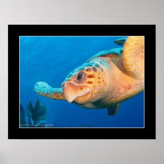 Ciérrese encima de tortuga en Belice Póster