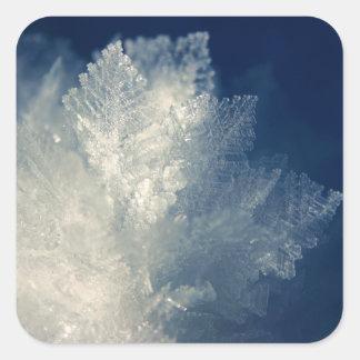 Ciérrese encima de vista de la mañana helada Frost Pegatina Cuadrada