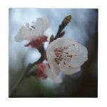 Ciérrese encima del flor del albaricoque en sombra azulejos cerámicos