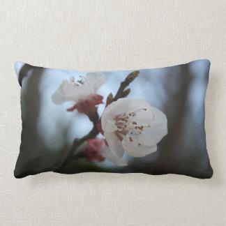 Ciérrese encima del flor del albaricoque en sombra almohada