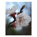Ciérrese encima del flor del albaricoque en sombra membretes personalizados