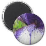 Ciérrese encima del imán del iris