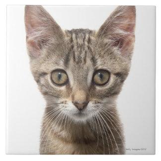 Ciérrese encima del retrato de un gatito azulejo cuadrado grande