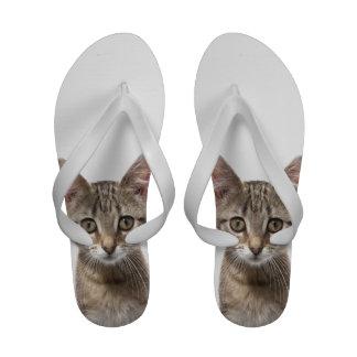 Ciérrese encima del retrato de un gatito sandalias de playa