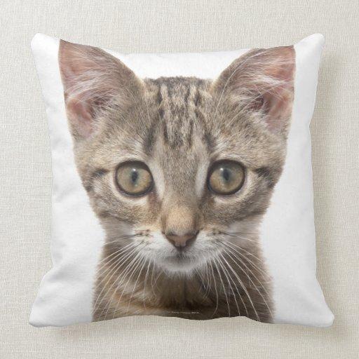 Ciérrese encima del retrato de un gatito cojín