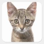 Ciérrese encima del retrato de un gatito pegatina cuadrada