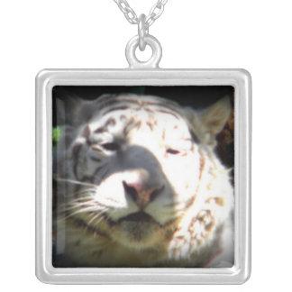 Ciérrese encima del tigre blanco joyería