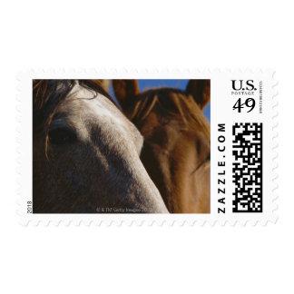 Ciérrese para arriba de caballos franqueo
