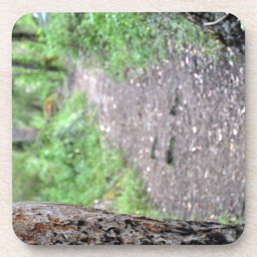 Ciérrese para arriba de corteza de árbol en bosque posavasos de bebida