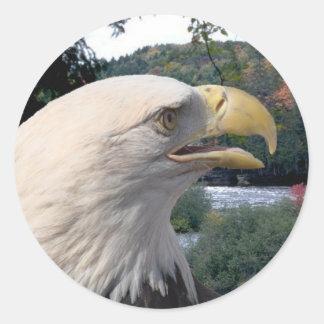 Ciérrese para arriba de Eagle calvo Etiqueta Redonda