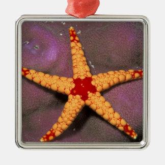 Ciérrese para arriba de estrellas de mar, o del adorno cuadrado plateado