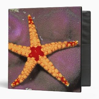 Ciérrese para arriba de estrellas de mar, o del fr