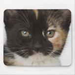 Ciérrese para arriba de gatito alfombrillas de ratón