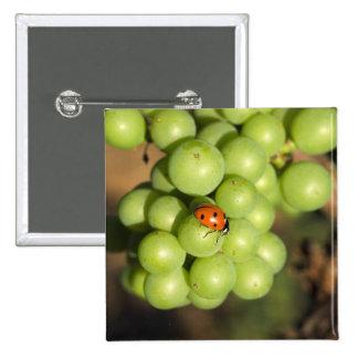 Ciérrese para arriba de insecto de la señora en la pin cuadrada 5 cm