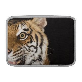 Ciérrese para arriba de la cara del tigre del rugi fundas para macbook air