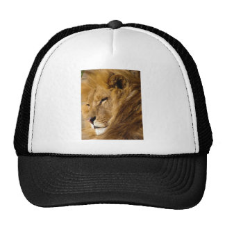 Ciérrese para arriba de la cara principal del león gorra