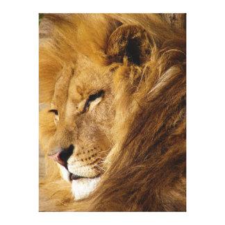 Ciérrese para arriba de la cara principal del león impresión en lienzo estirada