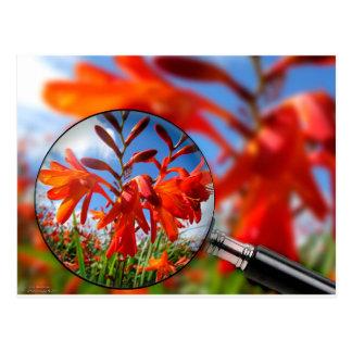 Ciérrese para arriba de la flor anaranjada postales