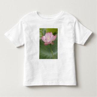 Ciérrese para arriba de la flor de Lotus, del Playera De Bebé