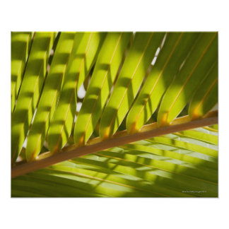 Ciérrese para arriba de la fronda tropical de la p posters