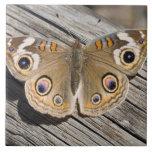 Ciérrese para arriba de la mariposa común del cast azulejo cuadrado grande