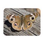 Ciérrese para arriba de la mariposa común del cast iman rectangular