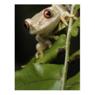 Ciérrese para arriba de la rana arbórea del bosque postales