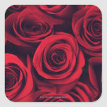 Ciérrese para arriba de las flores del rosa rojo pegatina cuadradas