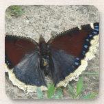 Ciérrese para arriba de mariposa de capa de luto posavaso