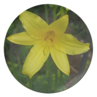 Ciérrese para arriba de mini Dayliliy amarillo - f Platos