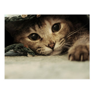 Ciérrese para arriba de ojos de gatos de un tabby postal
