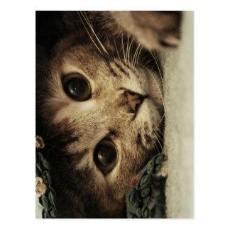 Ciérrese para arriba de ojos de gatos de un tabby postales