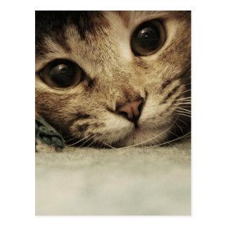 Ciérrese para arriba de ojos de gatos de un tabby tarjetas postales