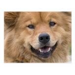 Ciérrese para arriba de perro de la mezcla del per tarjeta postal