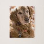 Ciérrese para arriba de perro de oro del labrador  puzzle con fotos