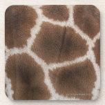 Ciérrese para arriba de piel de las jirafas posavaso