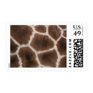 Ciérrese para arriba de piel de las jirafas sellos